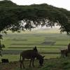 Ethiopia 2012_10